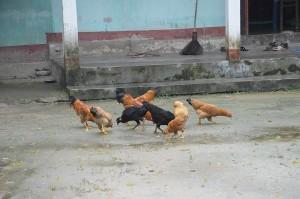 PhieuLangMuaDong01_10