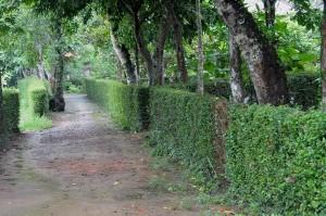 PhieuLangMuaDong01_13