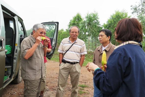 Quốc Lộ số 1. Bắp bên đường. TDLộc, Thái, Huỳnh, Nguyệt