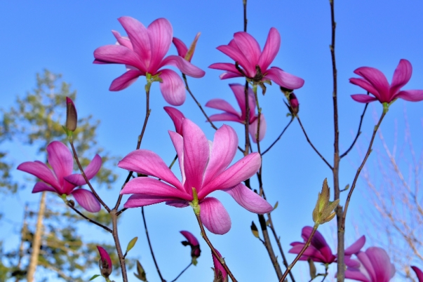 Hoa này tặng Cẩm- Photo: DoTung