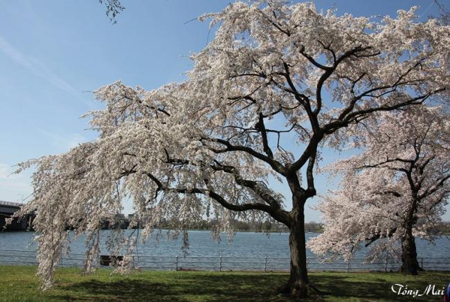 Mai 2013 - DC Sakura892