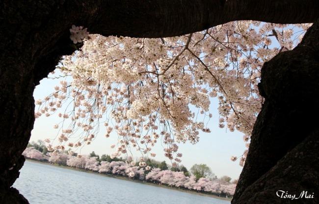 Mai 2013 - DC Sakura95