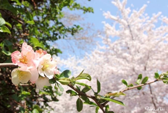 Mai 2013 - DC Sakura973