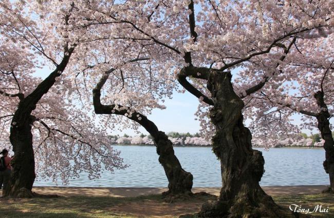 Mai 2013 - DC Sakura987