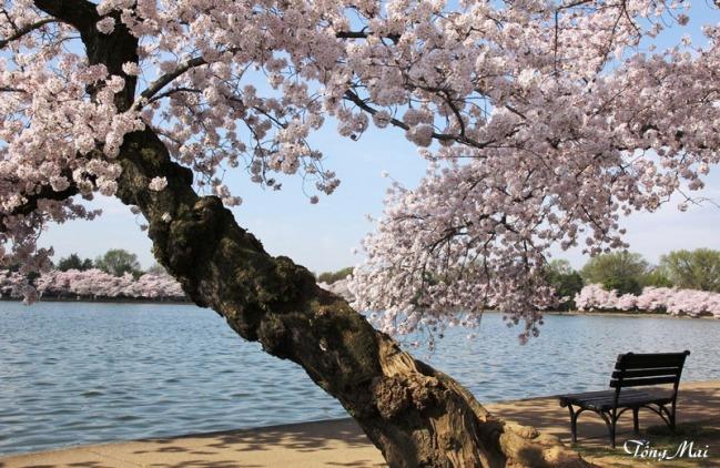 Mai 2013 - DC Sakura988