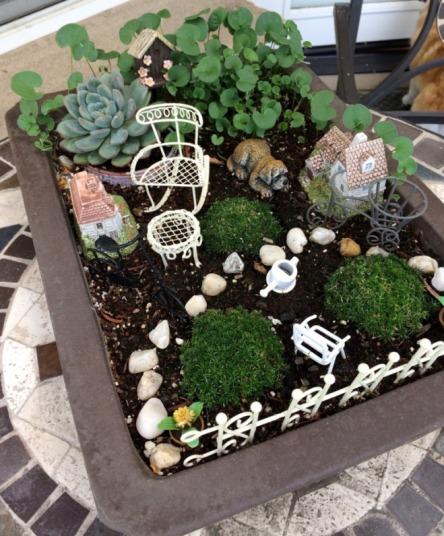 Lan Anh's Fairy Garden.