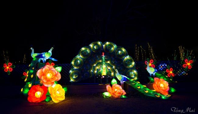 mai-2016-chinese-lantern-festival-2c-p