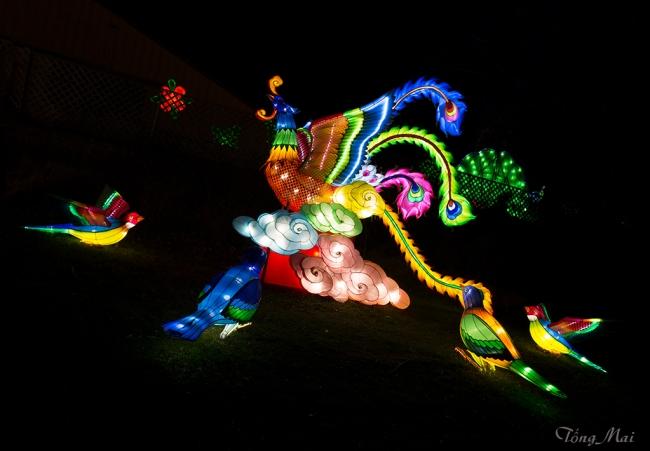 mai-2016-chinese-lantern-festival-2f-p