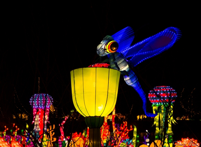 mai-2016-chinese-lantern-festival-2l-p