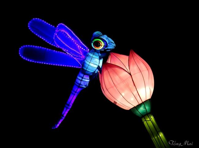 mai-2016-chinese-lantern-festival-3d-p