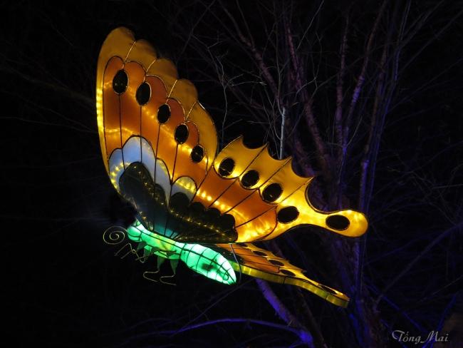 mai-2016-chinese-lantern-festival-3i-p2